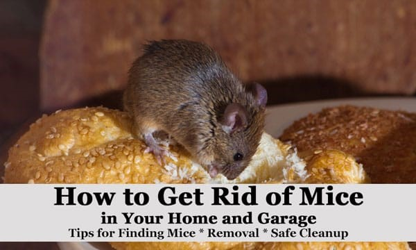 The Best Ways to Get Rid of Mice in Your House and Garage